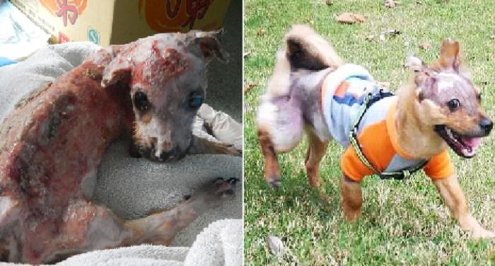 Rspca Dog Rescue Cornwall And Devon