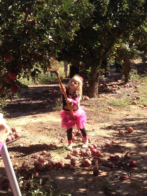 Apple-Annie's-Orchard-Willcox