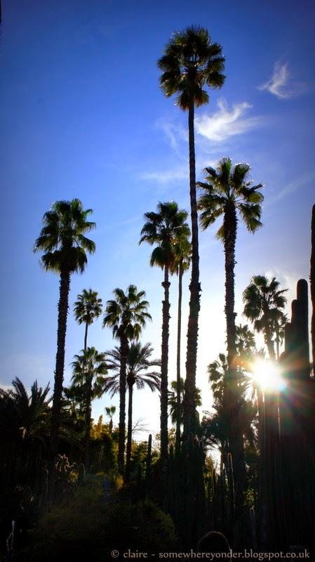 Treescape - Jardin Majorelle Marrakech