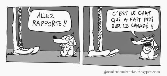 madanimalstories bon chien