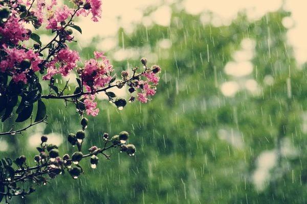 Smittenesque Spring Rain