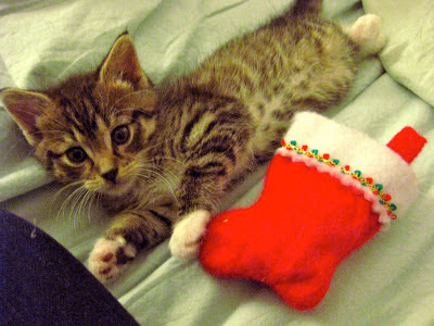 kitten with stocking