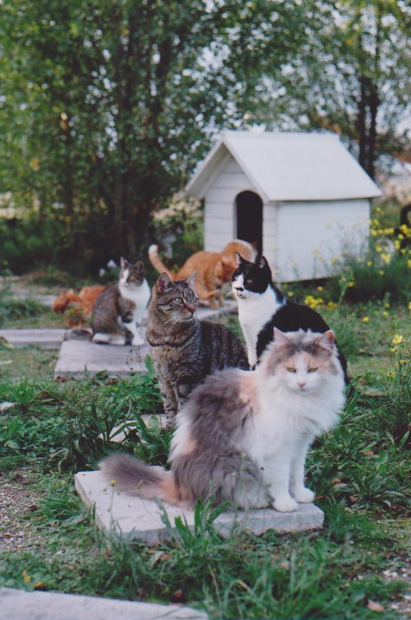 Les chats d 39 hemera les chats des jardins - Eloigner les chats du jardin ...