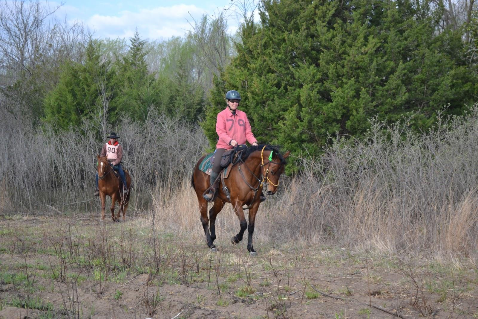 Horsetrailriderscom 2015