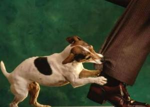 Alla Ricerca Del Siberian Husky Perché Un Cucciolo Morde Per Giocare