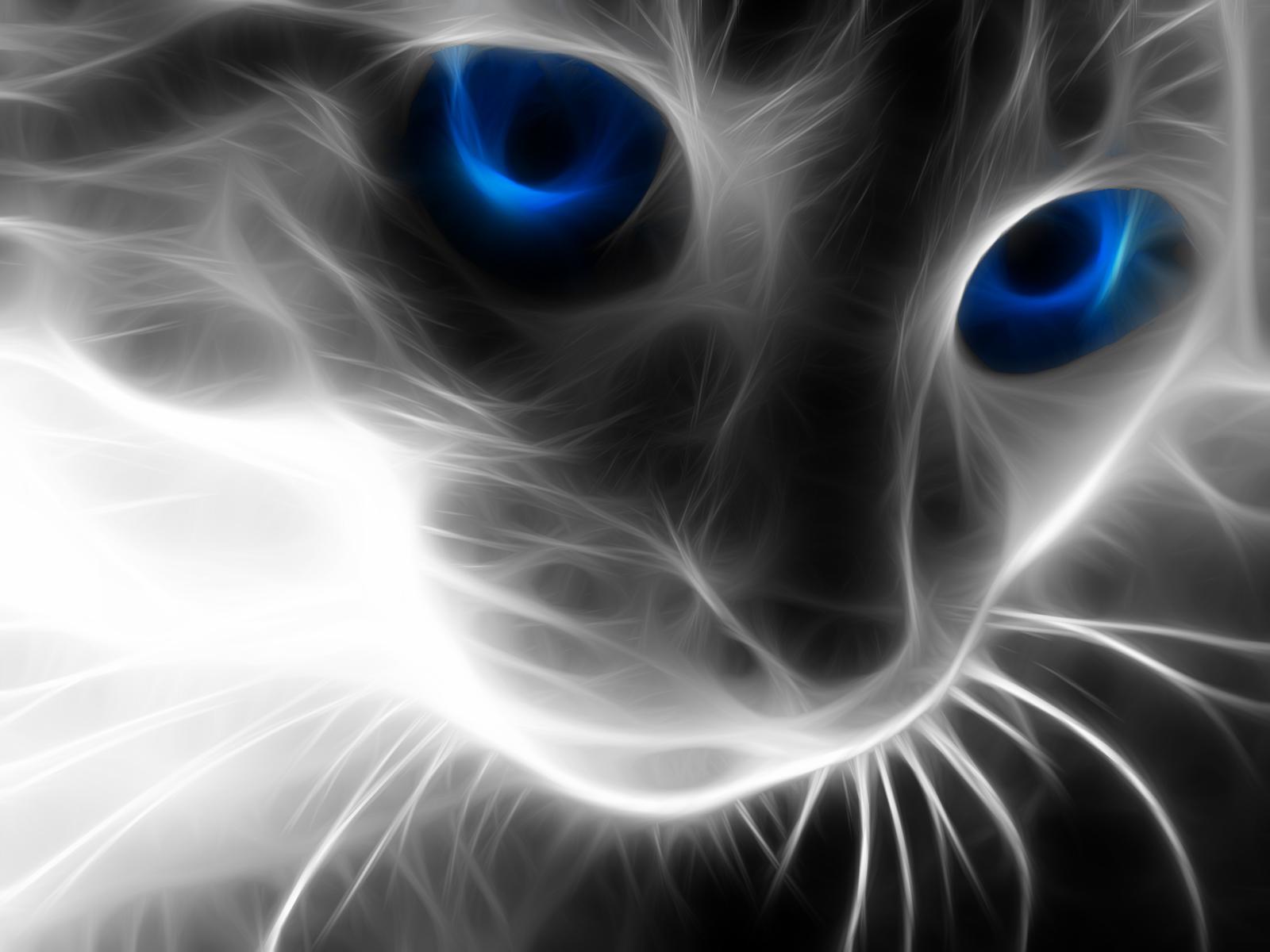 http://3.bp.blogspot.com/-ewvfCkcO8oA/TrlZUAwrNQI/AAAAAAAAAIc/gNp95xsnjGE/s1600/Blue%2Beyes%2Bcat.png
