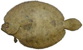 Our Flounder