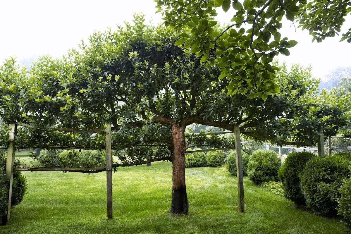 Ornamental tree zone 7a to 7b friendly gardening for Best ornamental trees for zone 7