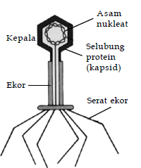 struktur dan bentuk virus