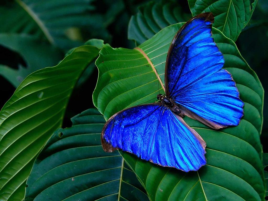 beautiful butterfly hd desktop - photo #9