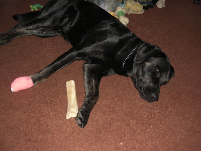 Picture of Rudy laying down sleeping - his paw is in the bandage