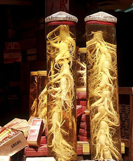 Panax ginseng helps delay aging.