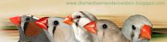 Mi blog sobre mis aves
