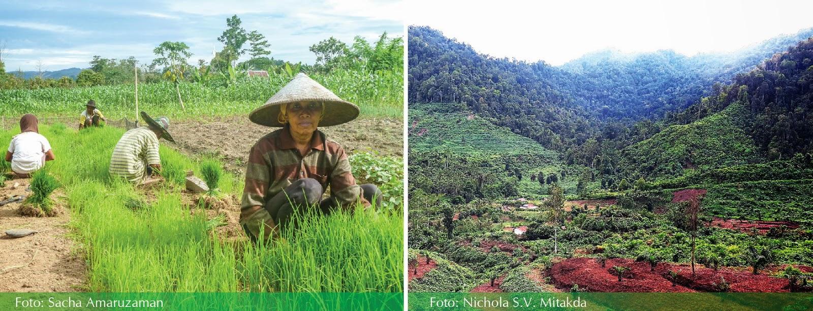 Pelaksanaan Pertanian Hijau Di Indonesia Kiprah Agroforestri