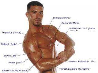 Cara Membentuk Otot Tanpa Suplemen