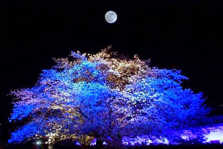 Beautiful Moon Tree Night Nature Wallpaper