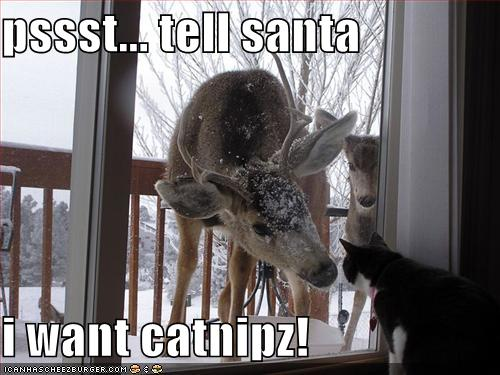 Christmas Cat Funny Cats Pictures