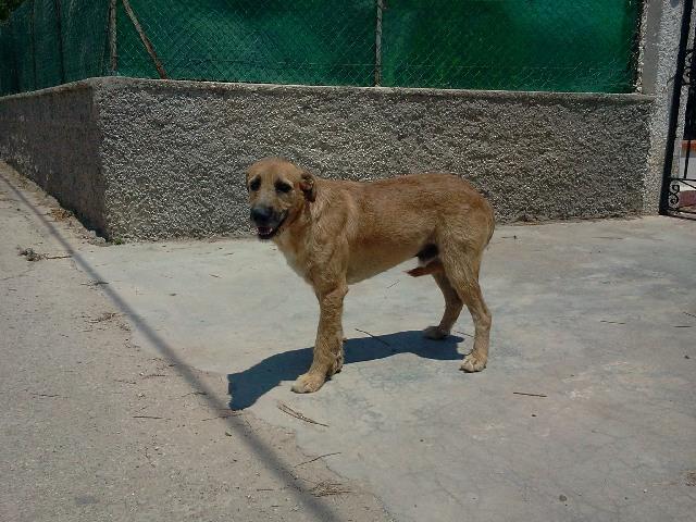 Adotta un cane a siracusa danco cane messo all 39 asta - Immobile intestato ad un solo coniuge ...