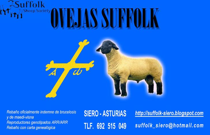 Suffolk_Siero