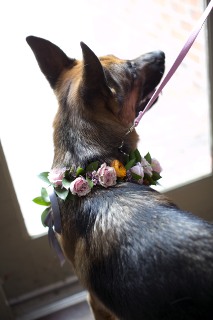 Fresh floral dog collar for wedding dog best man ring bearer dog collar pink spray roses orange ranunculus German Shepherd