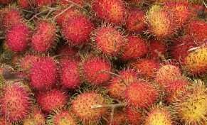 original fruit indonesia