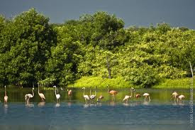 Diversidad de Fauna del Estado Zulia