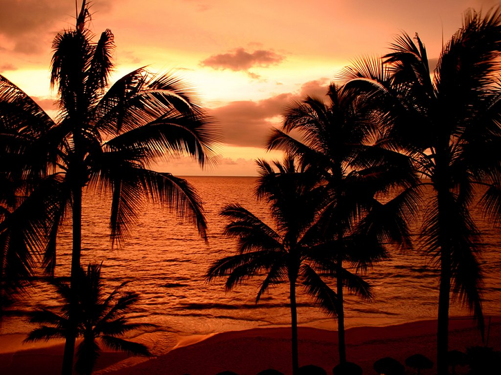 Tropical beach sunset pictures