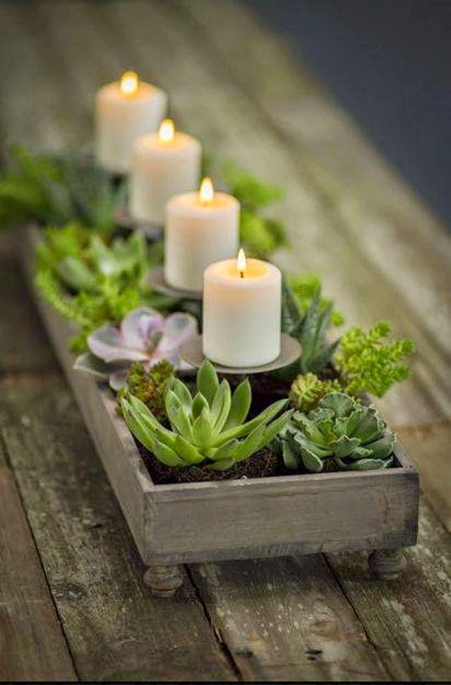Ciao newport beach winter ideas for succulents