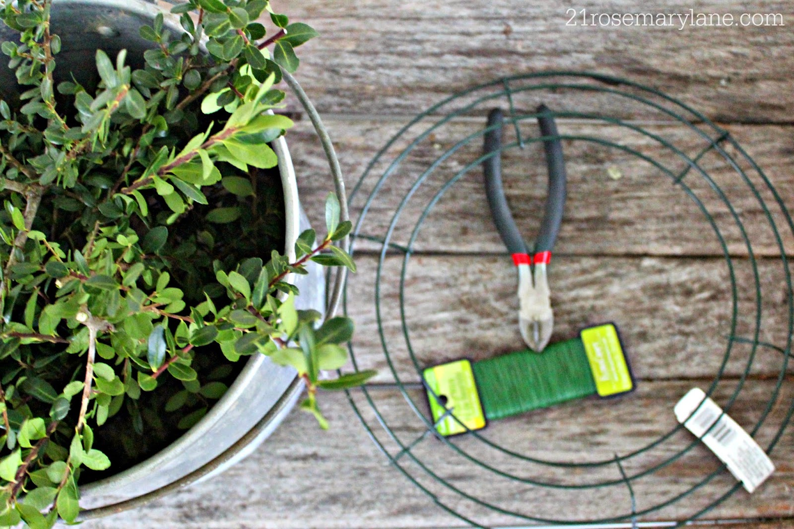 21 Rosemary Lane: Easy to Make Boxwood Wreath