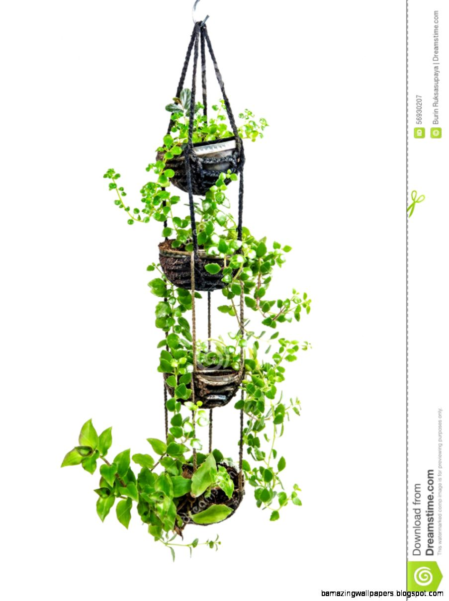 House Plant Hanging Crochet Work Stock Photo   Image 56930207