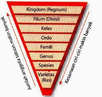 Tingkatan Takson dalam Klasifikasi