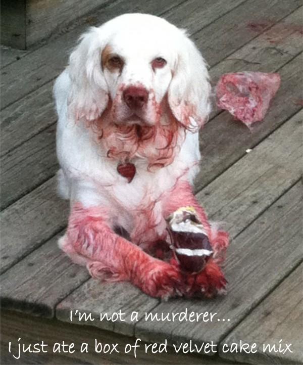 I'm not a murderer