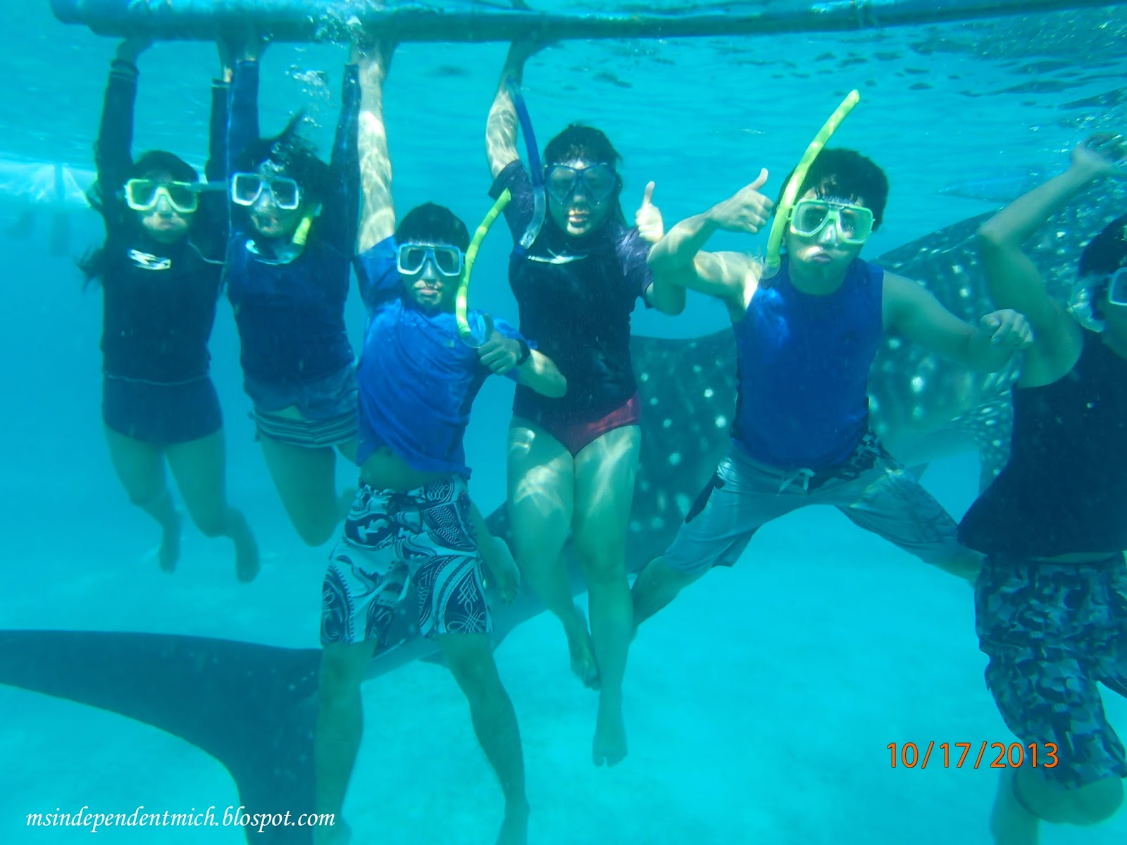Close Your Eyes And Jump Swimming With The Whale Sharks