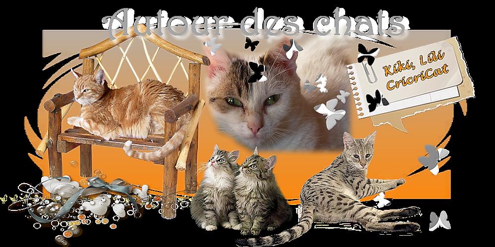 Autour des chats