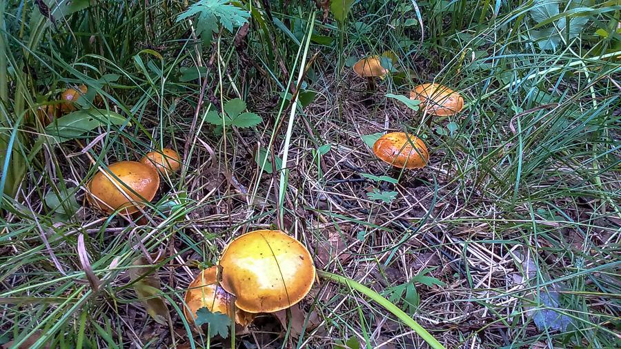 К Сыростану за грибами