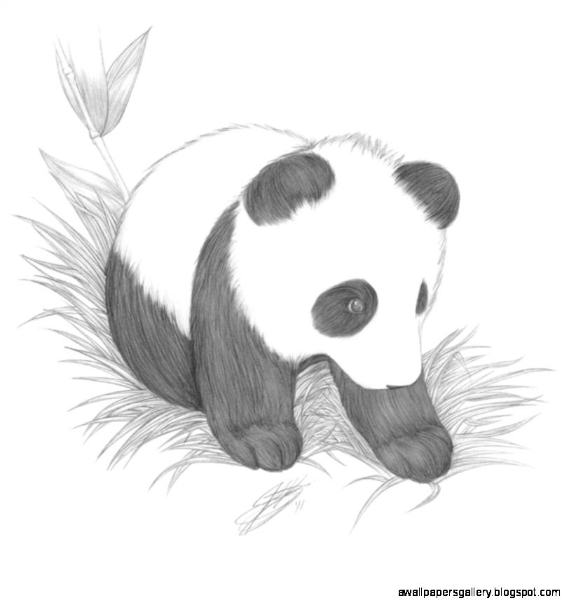 Cute Baby Animal Drawings In Pencil