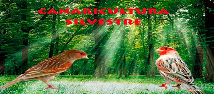 canaricultura silvestre