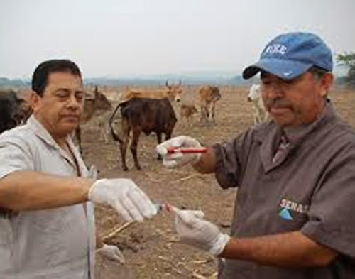 Olanchito,Tocoa,Yoro, Honduras
