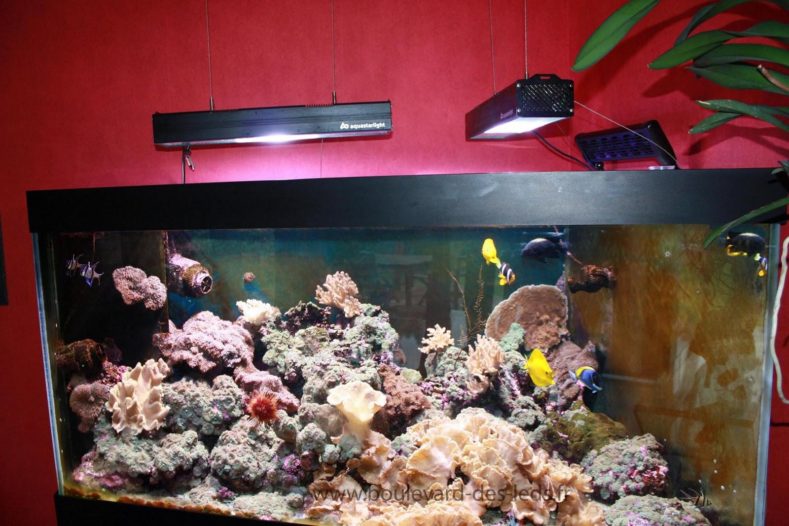 Bandeau Led Aquarium Projet Led Pour Aquarium Recifal A Coraux