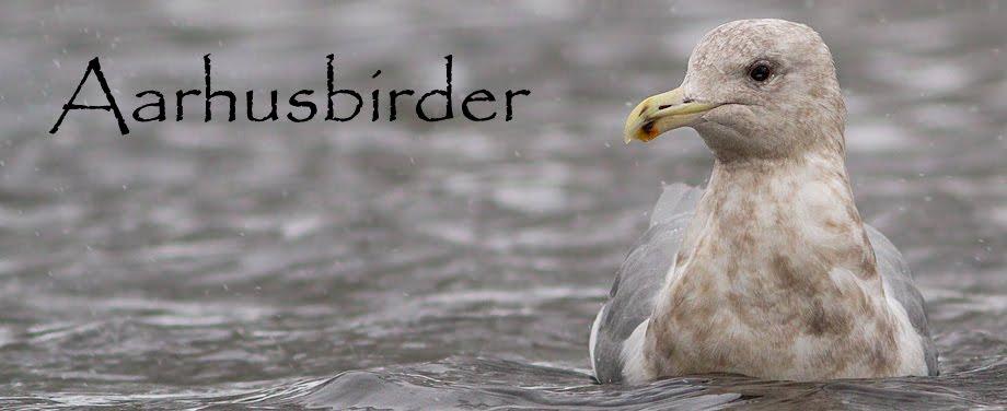 Aarhusbirder