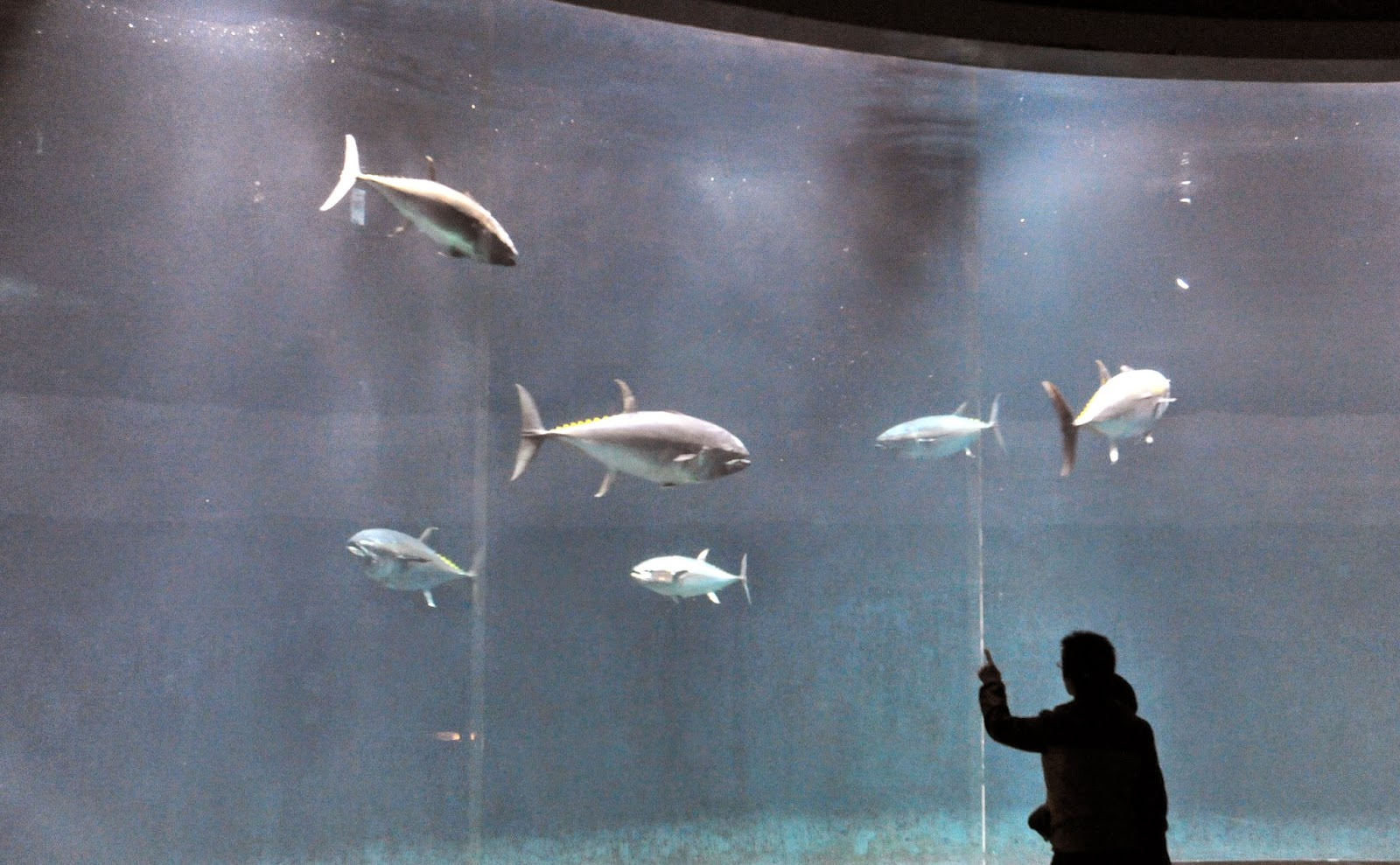 http://www.hindustantimes.com/world-news/tokyo-aquarium-baffled-by-mystery-fish-deaths/article1-1330373.aspx