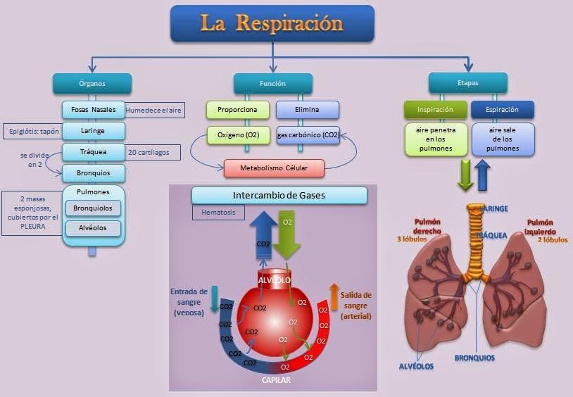 Fisiologia Basica de Citlalic Xiomara Nuñez Alvarez: ANATOMIA DE ...