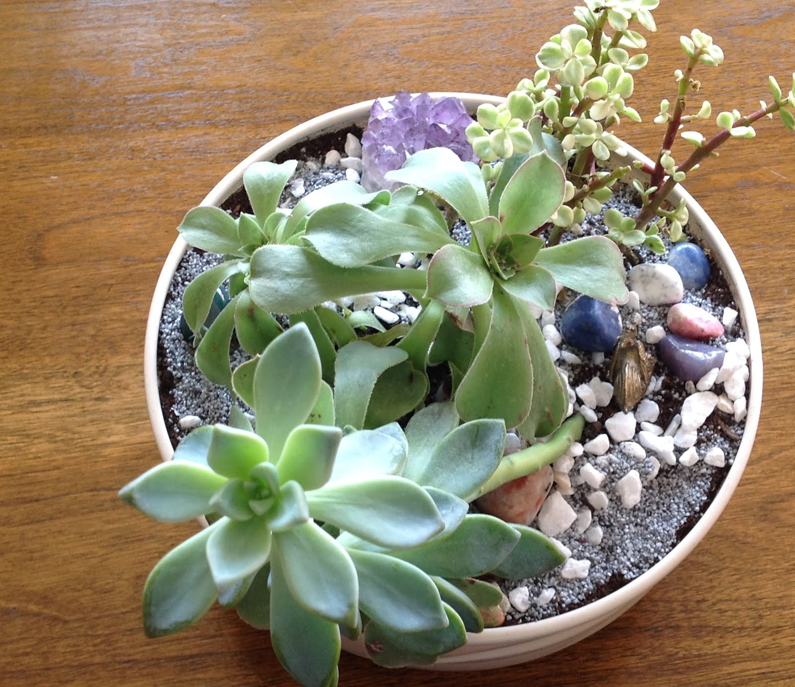Winter Succulent Garden