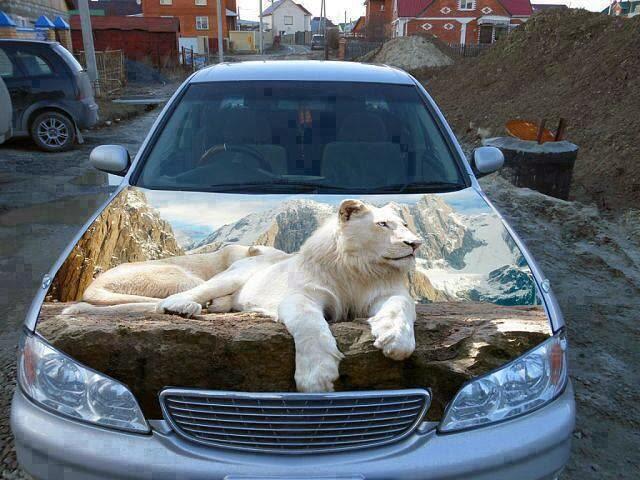 Imagen de un león en el capo de un coche