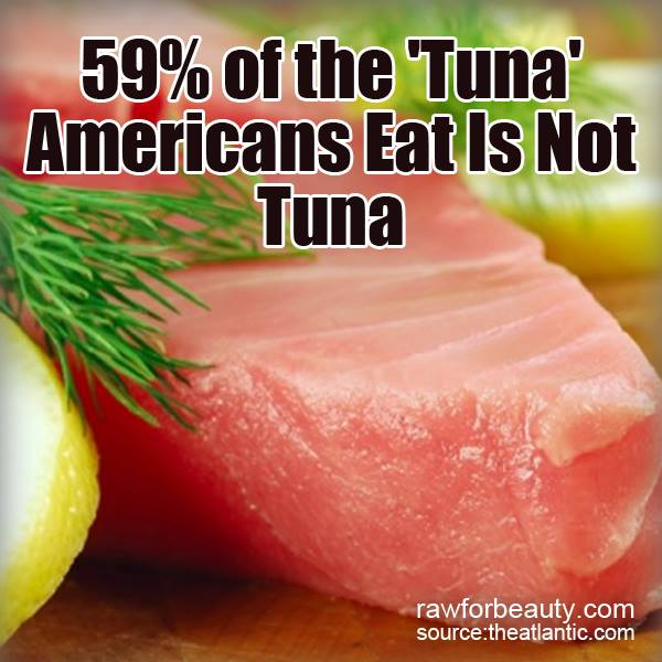 Natural cures not medicine 59 of the tuna americans eat for What do tuna fish eat