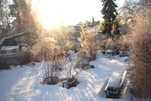 aliciasivert alicia sivertsson snö vinter trädgård motljus sol solsken snow winter garden sweden backlight sun sunshine