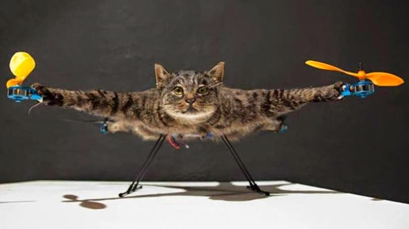 flying dead cat gato morto voador
