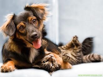 ADOPCIONES DE ANIMALES...