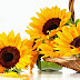 Sunflowers on basket photos