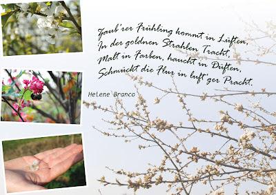 Kirschblüte,Hummel,Gedicht